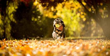 Геримакс -Осень не время для усталости